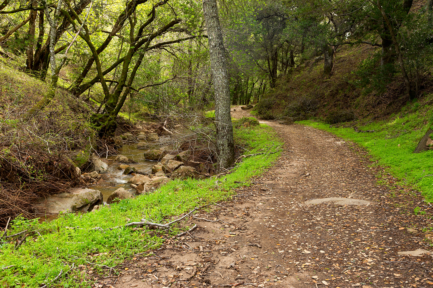 Madrone Canyon Sycamore Creek Trails-42.jpg