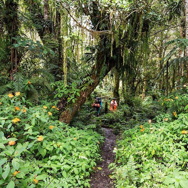 Disappearing in to the rainforests of Mt Apo...we slipped and stumbled our way on wet, steep trails until we collapsed at base camp, 8 hours and 21k vertical steps later...