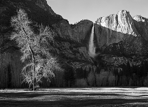 Cottonwood and Yosemite Falls 7x9.jpg
