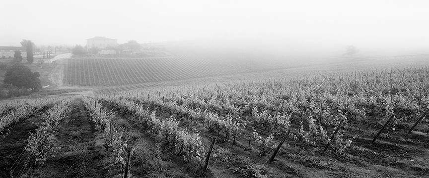 Foggy Vineyard 15x36.jpg