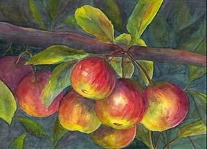apples v1 trimmed small.jpg