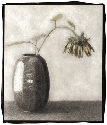 Sunflower 3.jpeg