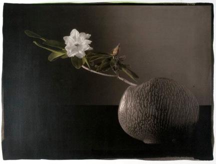 White Rhody in Vase.jpeg
