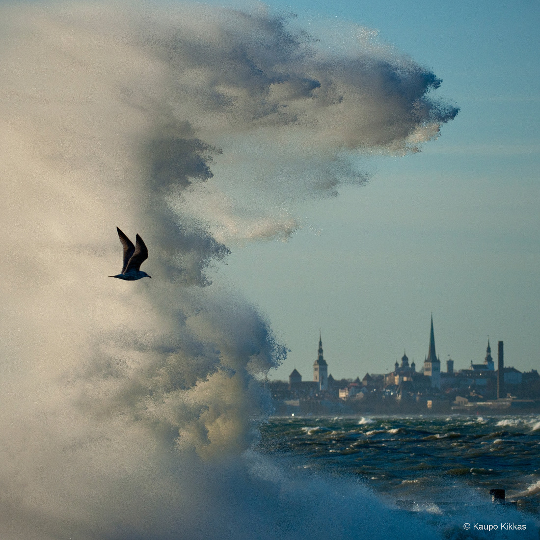 Estonian Nature Photo of the year 2012 - Nordea prize