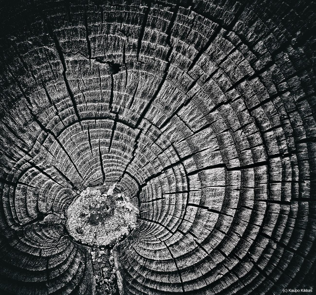 ins_kaupo_kikkas_heart_of_the_tree.jpg