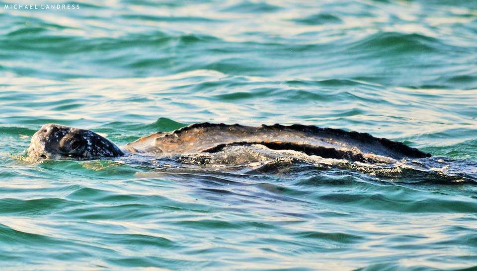 Photo: FWC Fish and Wildlife Research Institute, flickr creative commons.
