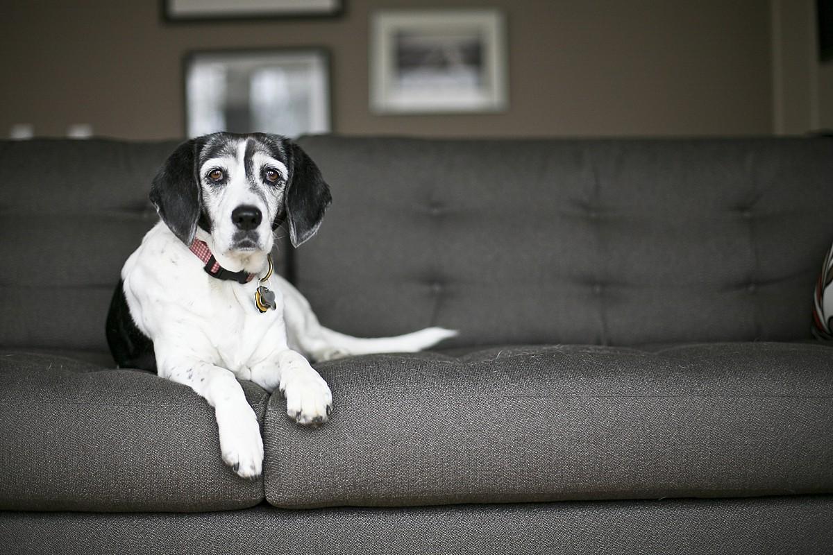 heavenmcarthur-pets-website_0001.jpg