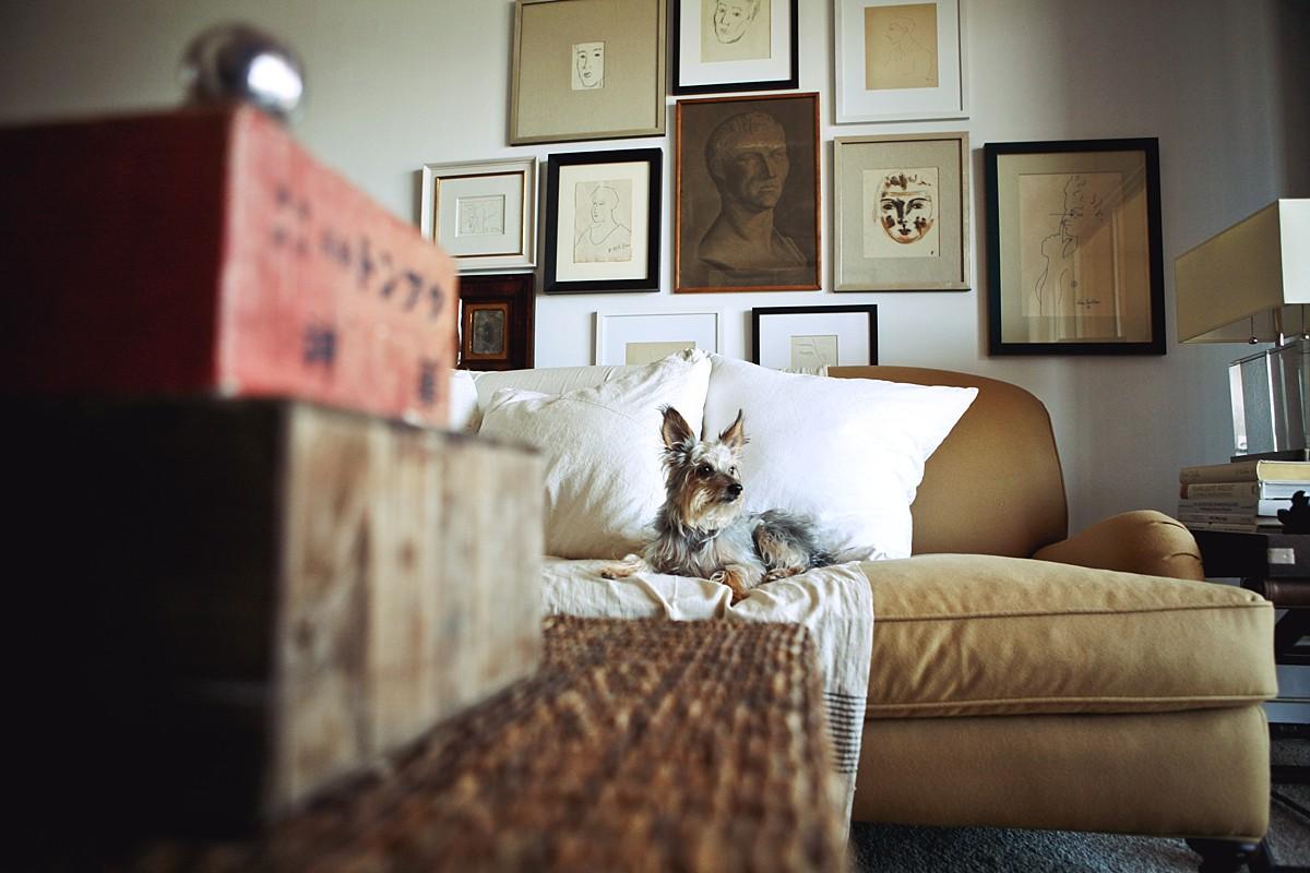heavenmcarthur-pets-website_0003.jpg