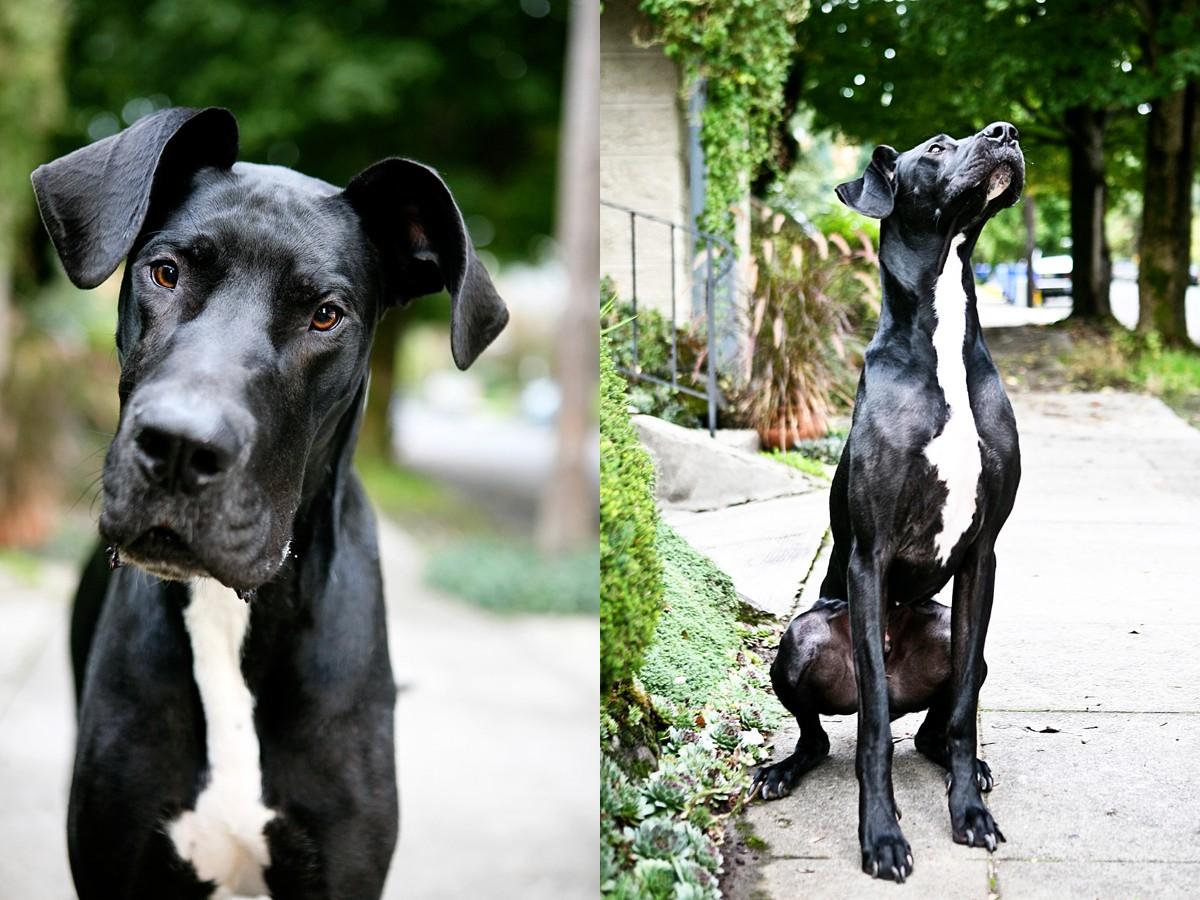 heavenmcarthur-pets-website_0006.jpg