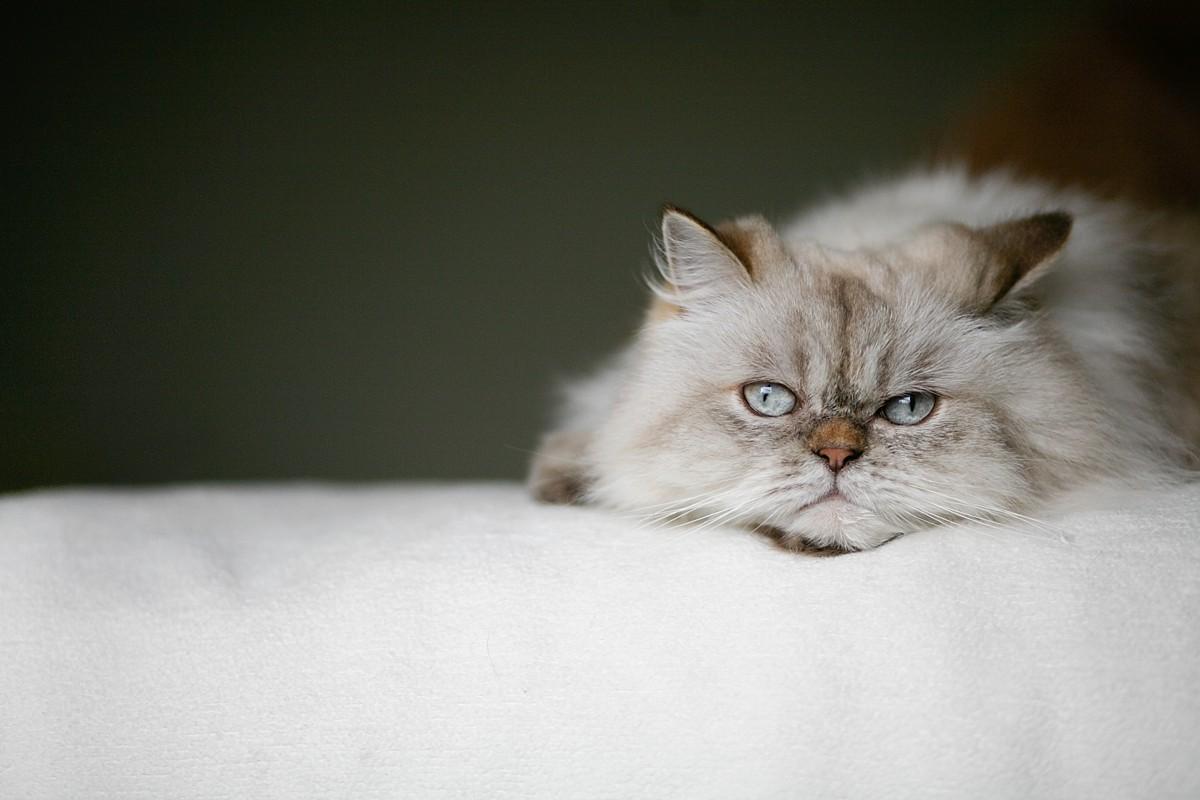 heavenmcarthur-pets-website_0010.jpg