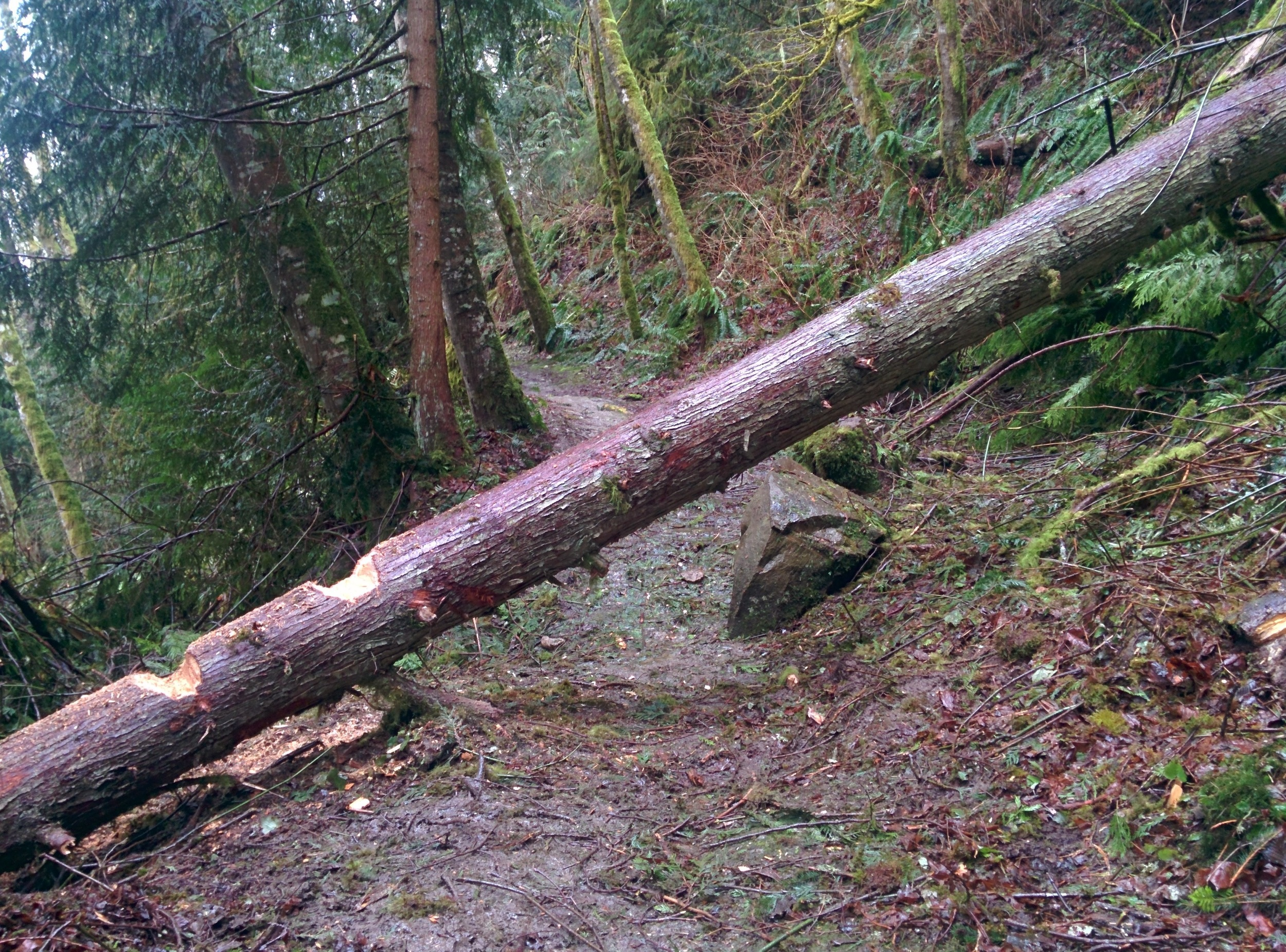 South Lost Lake Trail after