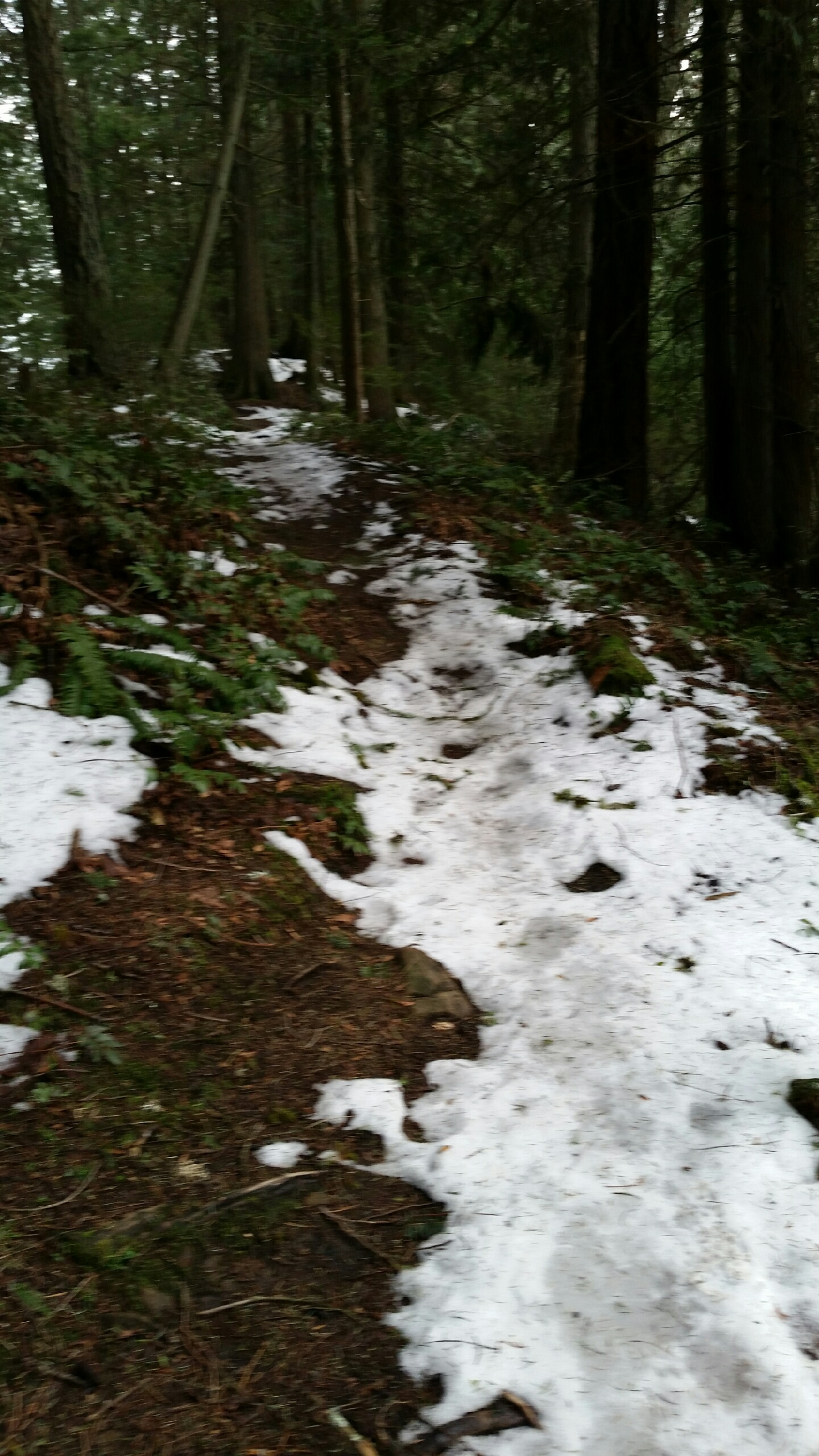 The Ridge Trail is snowy & icy in patches, especially the first mile.