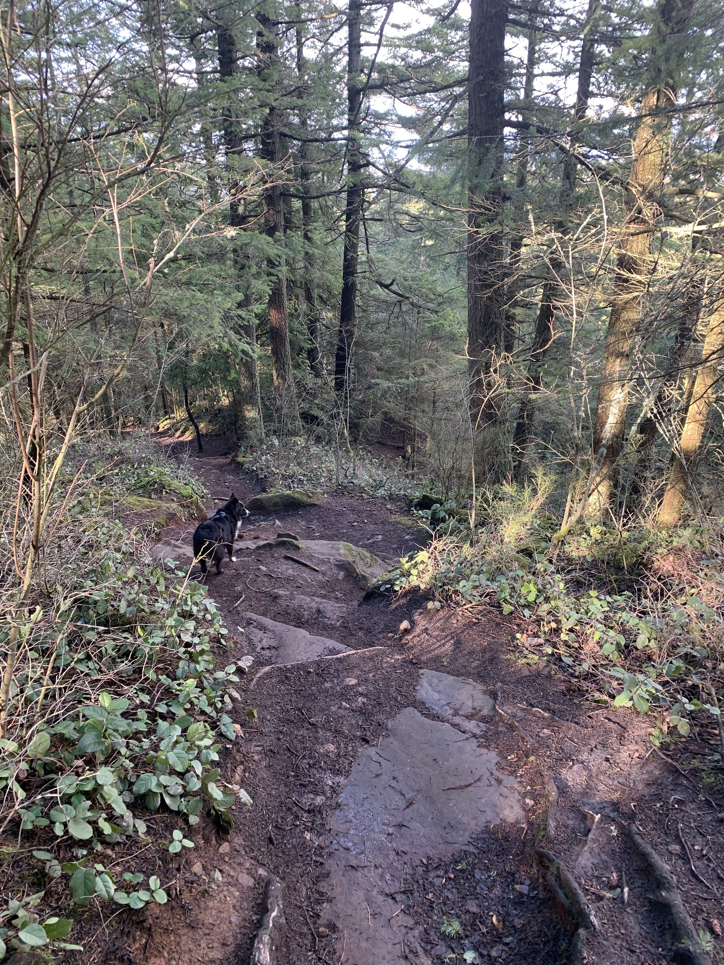 Once you get past the connector to Lower Ridge Trail, the North end of the Ridge starts to clear up.