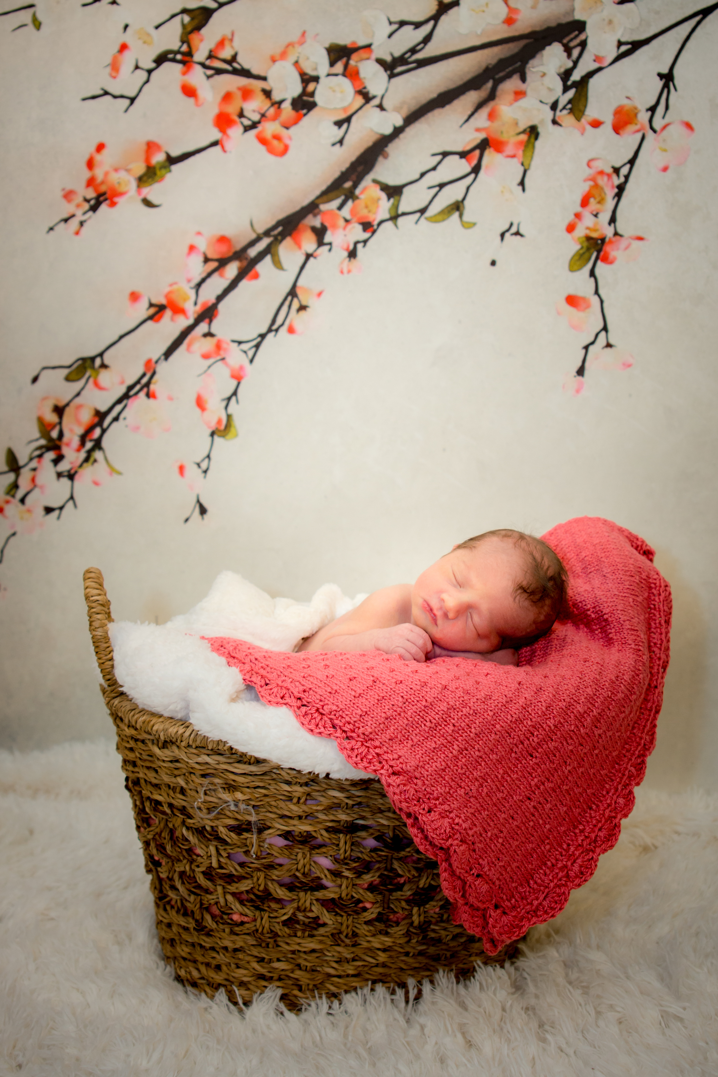 LISTEN TO LORIE'S LULLABIES BY CLICKING ON THE IMAGE