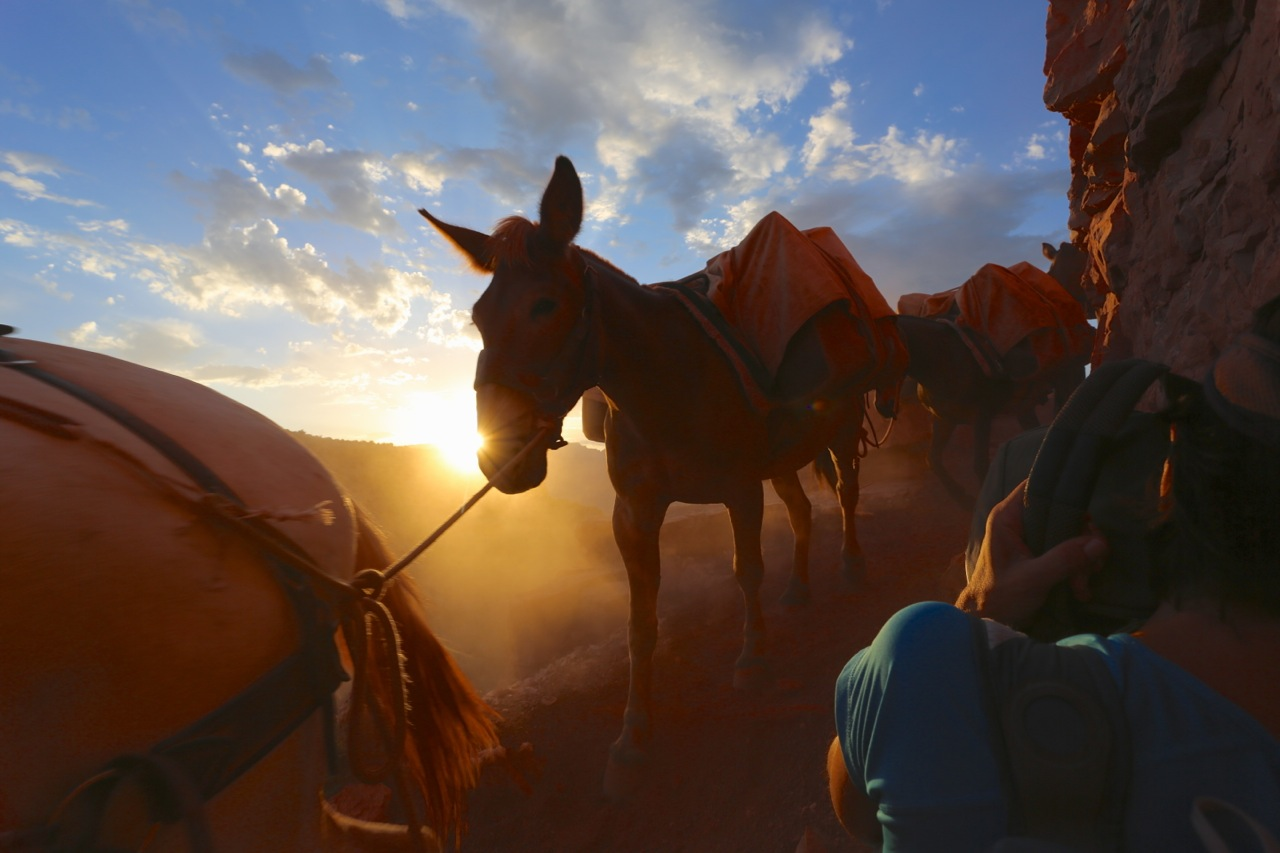 A mule train descends just as the sun rises above the horizon. The narrow trail forced us to hide against the rock in a futile attempt to avoid the monstrous cloud of dust kicked up by the mule train.
