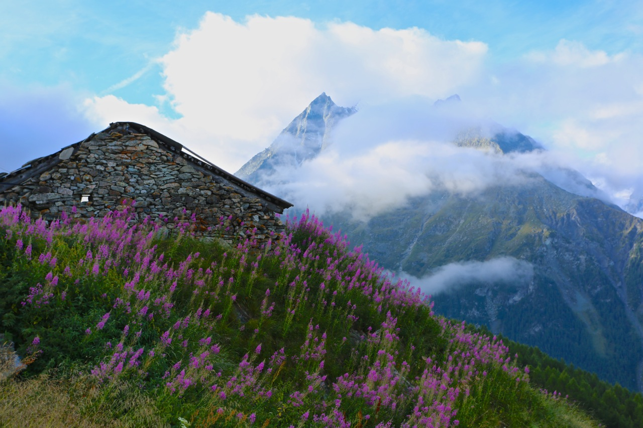 Wildflowers and an old shepherd's hut on the hike up to Col de Tsate.