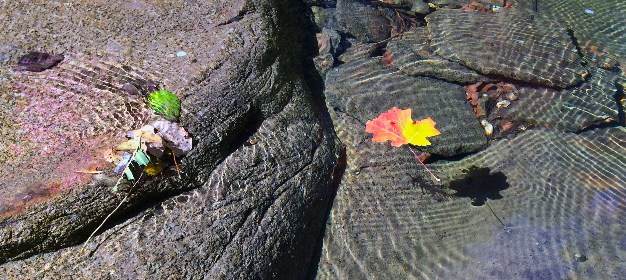 Fall leaves float in the west fork of Oak Creek, near Sedona, Arizona. Photo taken with an iPhone 5s.