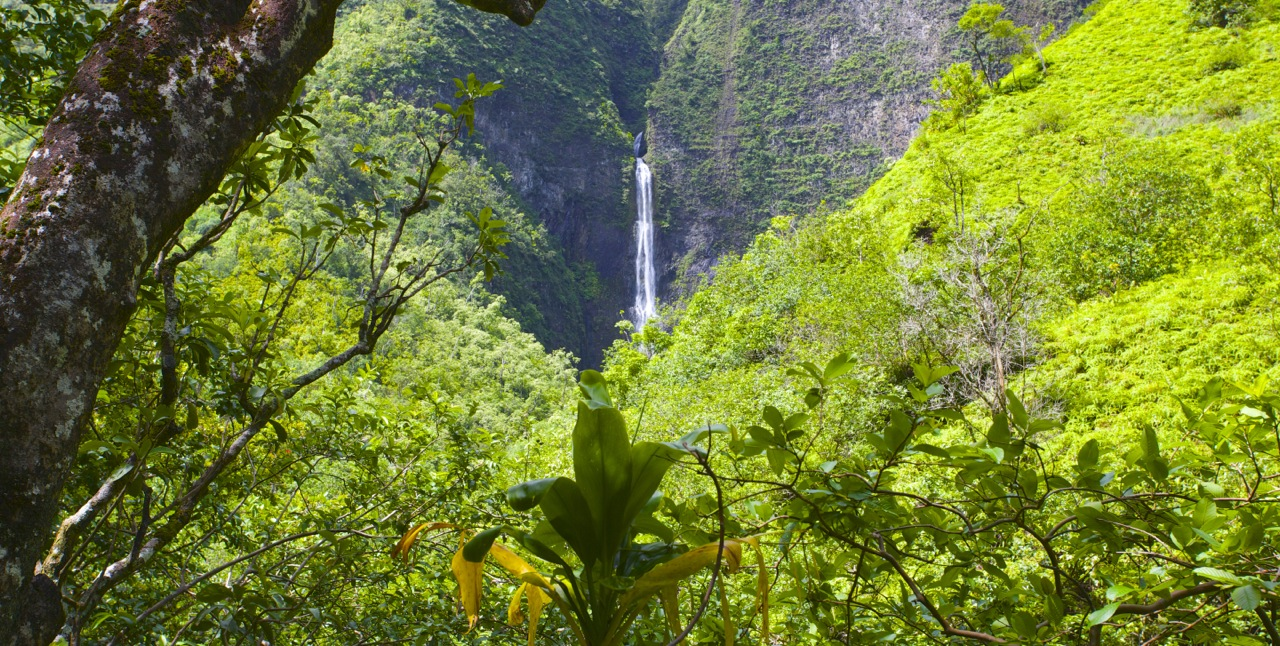 Turning inland, a gradual climb of 600 feet over two miles takes you to this first view of 200 foot Hanakapi'ai Falls.