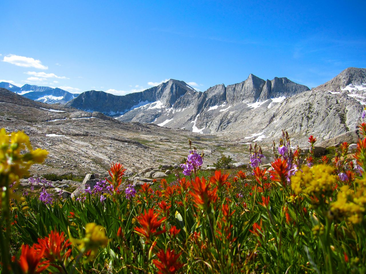 A rainbow of wildflowers above Merriam Lake on the climb to Feather Pass.