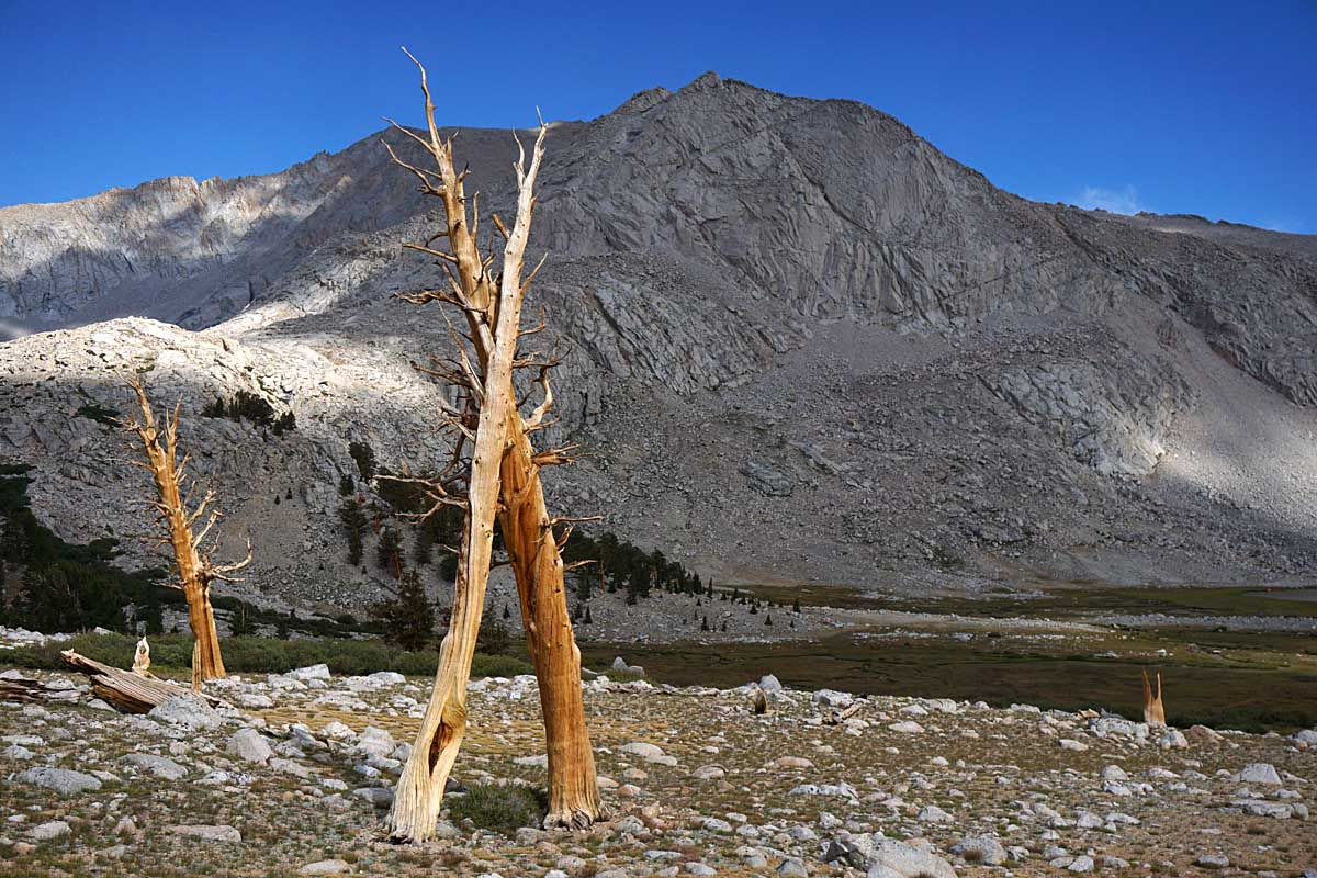Skeletons of ancient pines dot the 11,500 foot plateau south of Wright Lakes. Easy walking and great views abound along the two miles south of Wright Lakes Pass, heading toward Wallace Creek.
