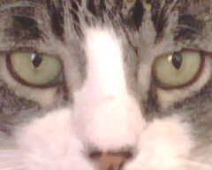 Theo looking stragith ahead.JPG