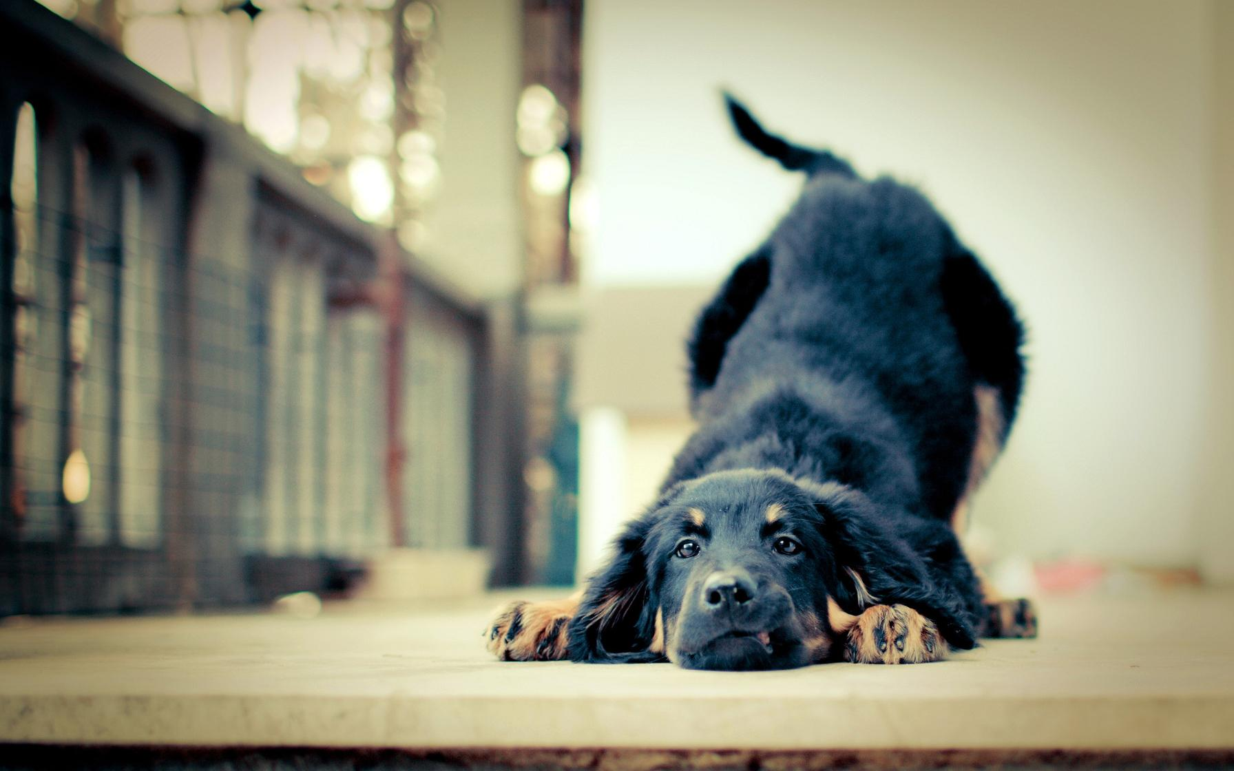 dog screen saver for 2012 impact page.jpg