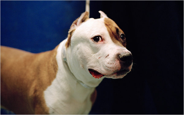 "The Beautiful Dog known as Phoenix who later died of  injuries sustained by two ""bored""  Baltimore twins."