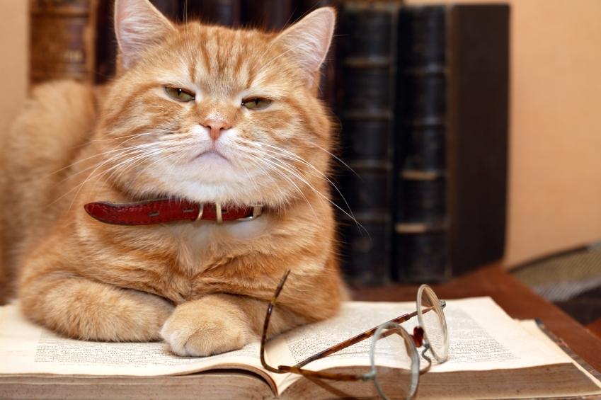 Cat-reading1.jpg