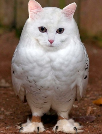 No cats or owls were harmed in the making of this owl cat:)