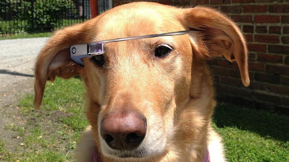 dog-google-glass.jpg