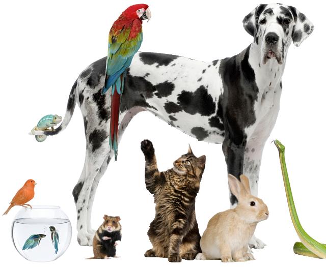 image Jacks Pets.com