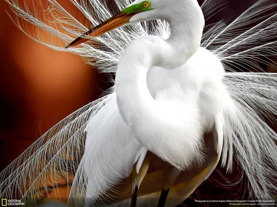 Crane from NatGeo award winners 2015