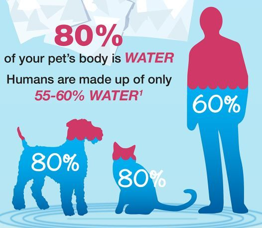 pets and humans water.jpg