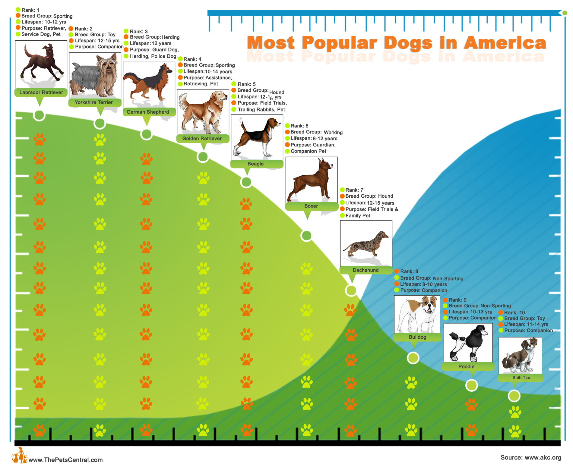 top10-most-popular-dogs-in-america_502917884b7f0.jpg
