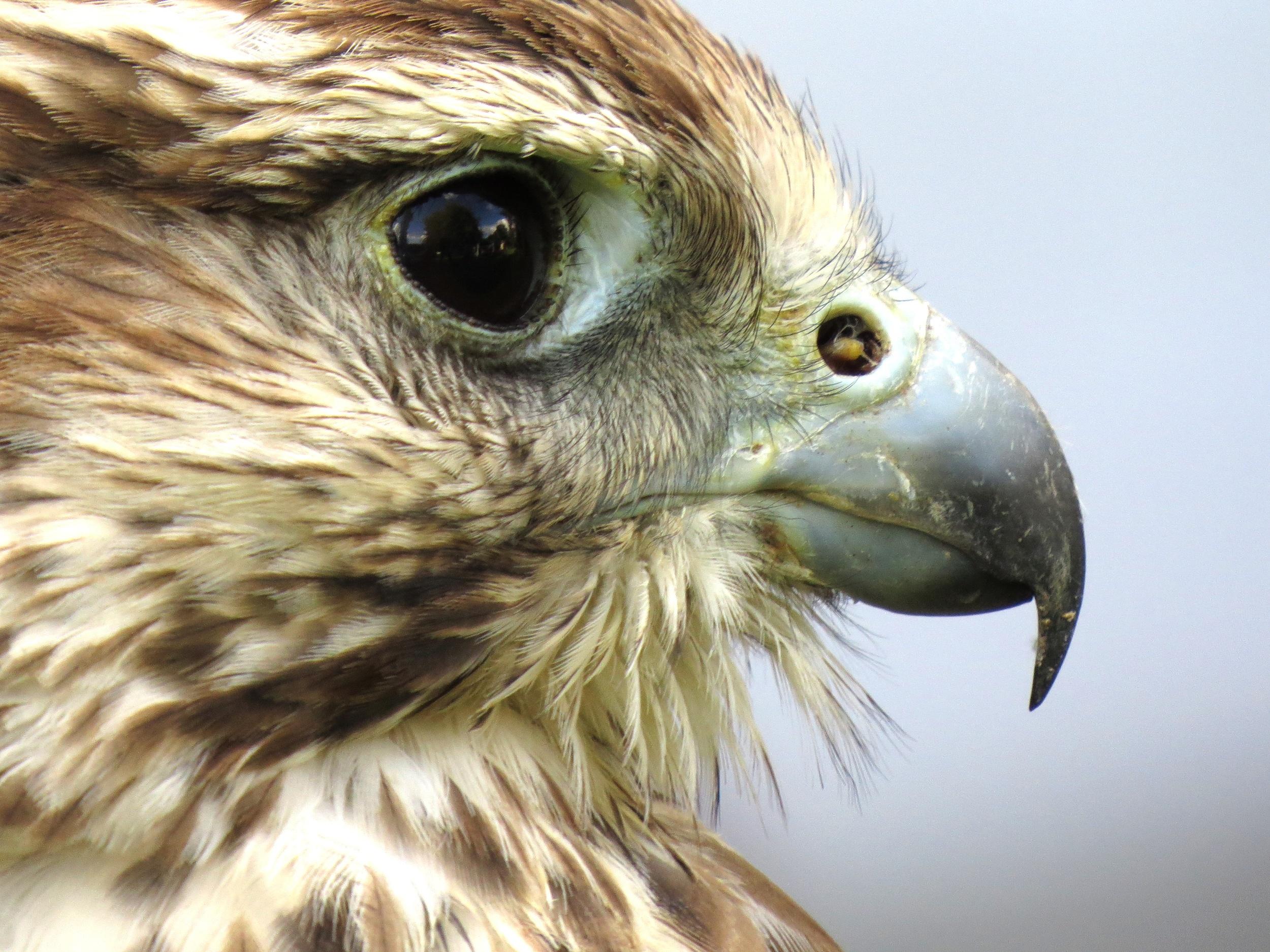roland kirk eagle profile cW Up.jpeg
