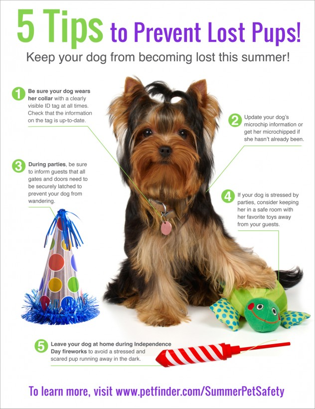 5-tips-to-prevent-lost-pups-632x820.jpg