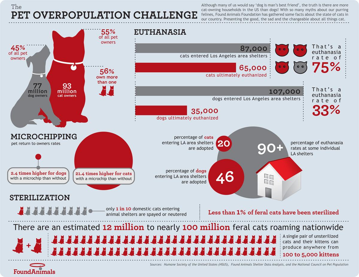 The-pet-overpopulation-challenge.jpg