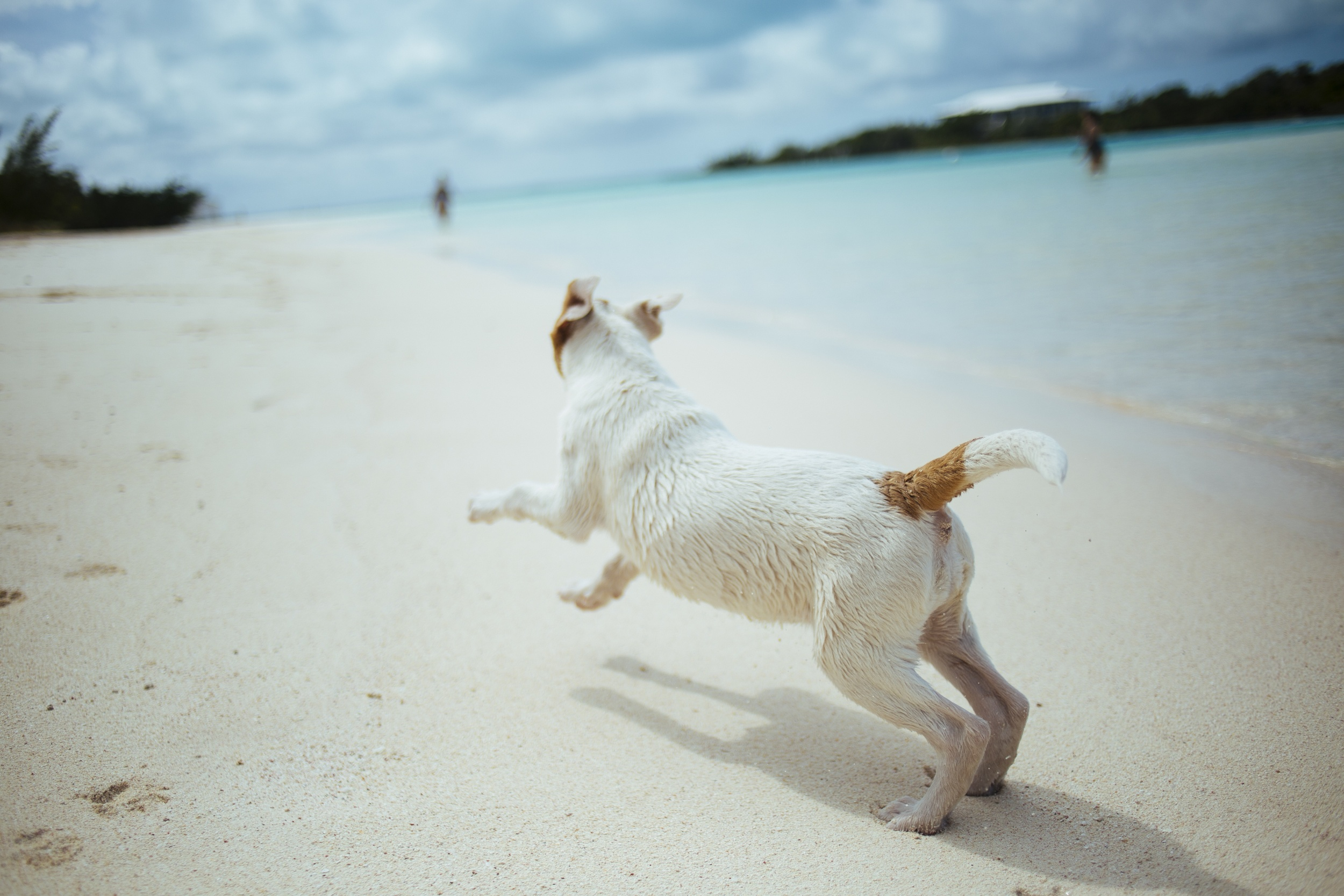 dog on beach spratt