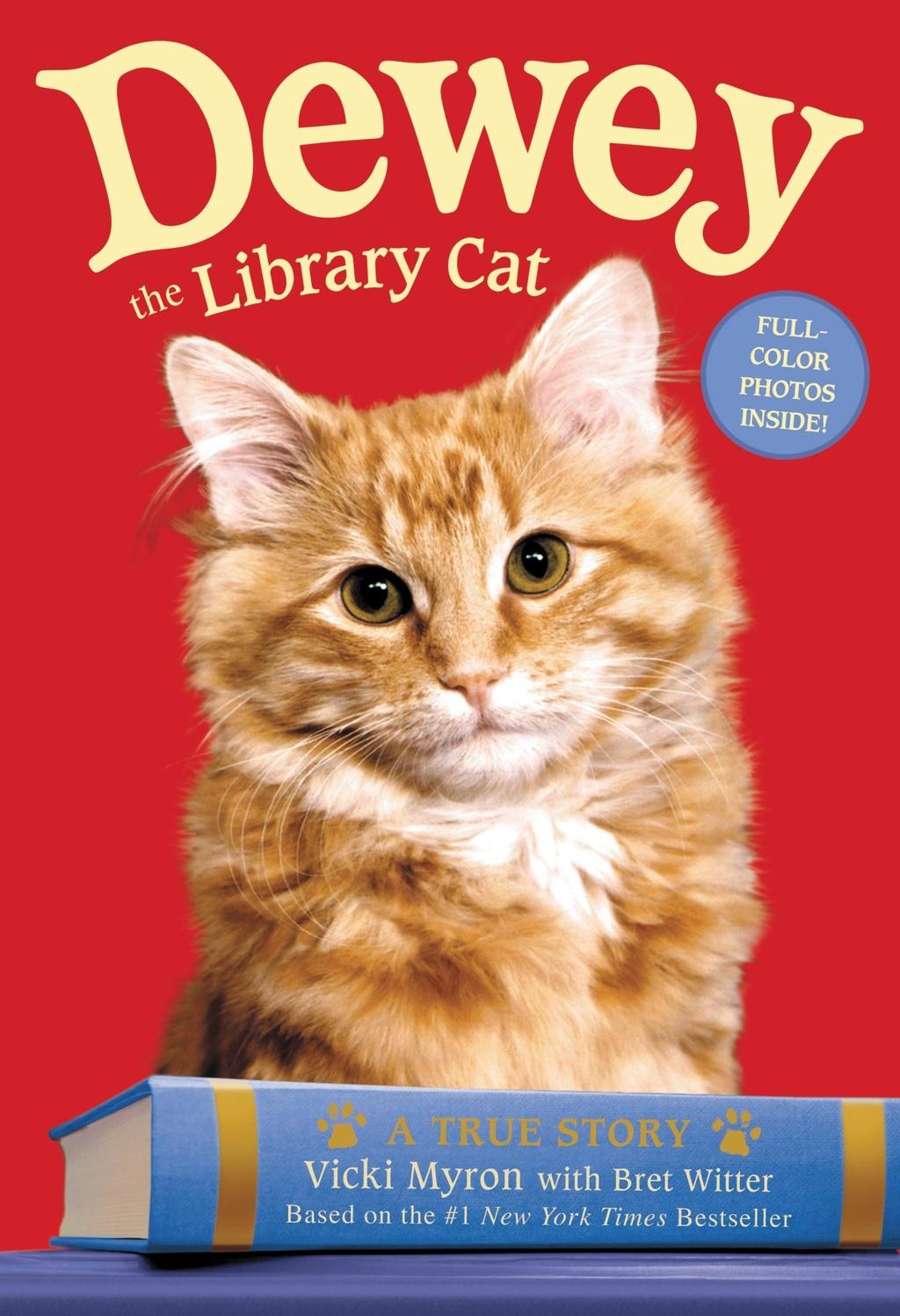 dewey the library cat.jpg
