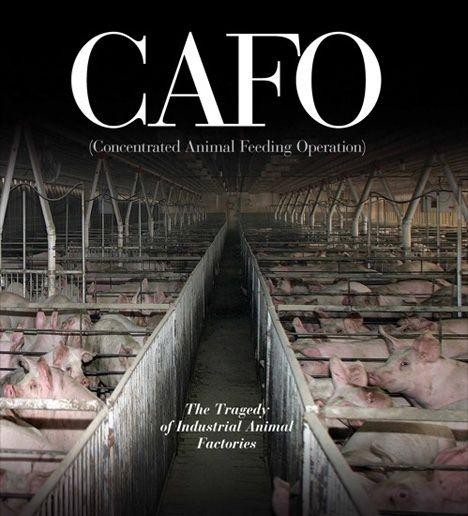 cafo book cover.jpg