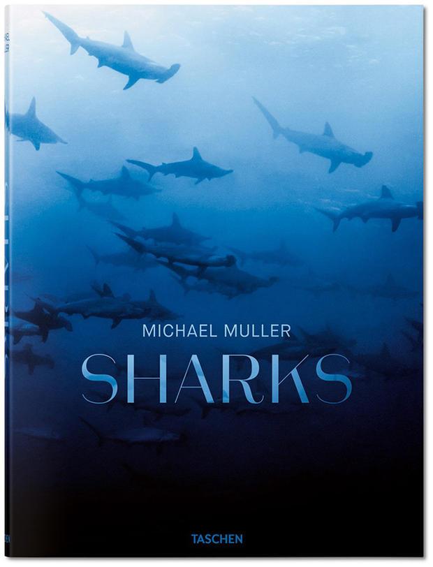 sharks michael mueller.jpg