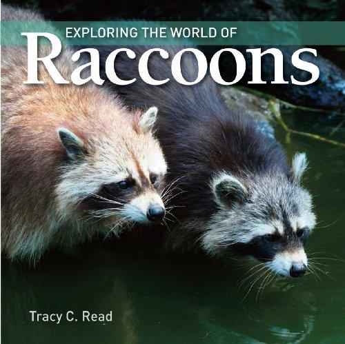 exploring the world of raccoons reid.jpg