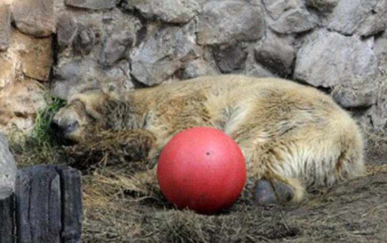 arturo red ball.jpg