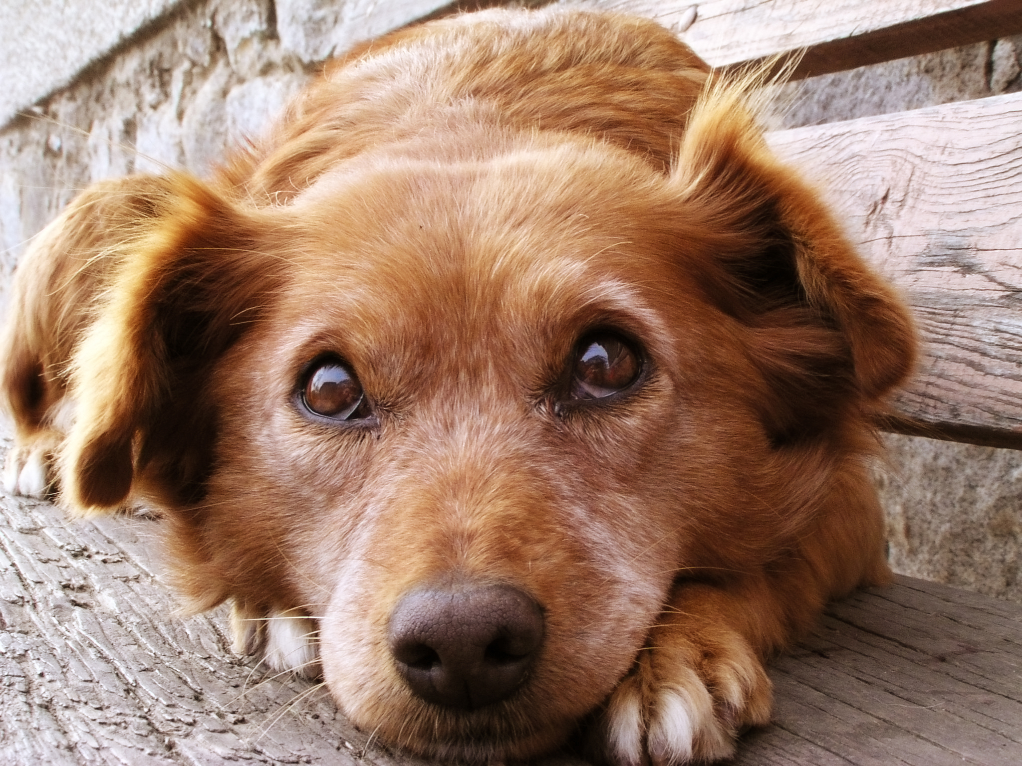 dog-how-to-select-your-new-best-friend-thinkstock99062463.jpg