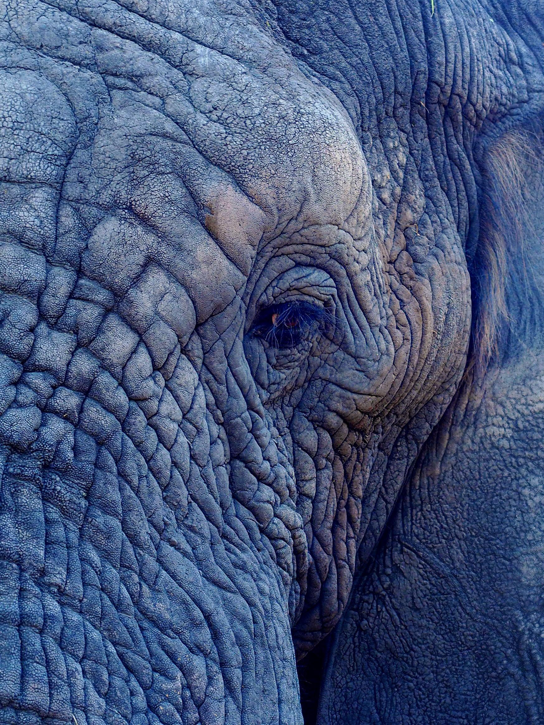 jennifer latuperisa andresen elephant profile Up cW.jpg
