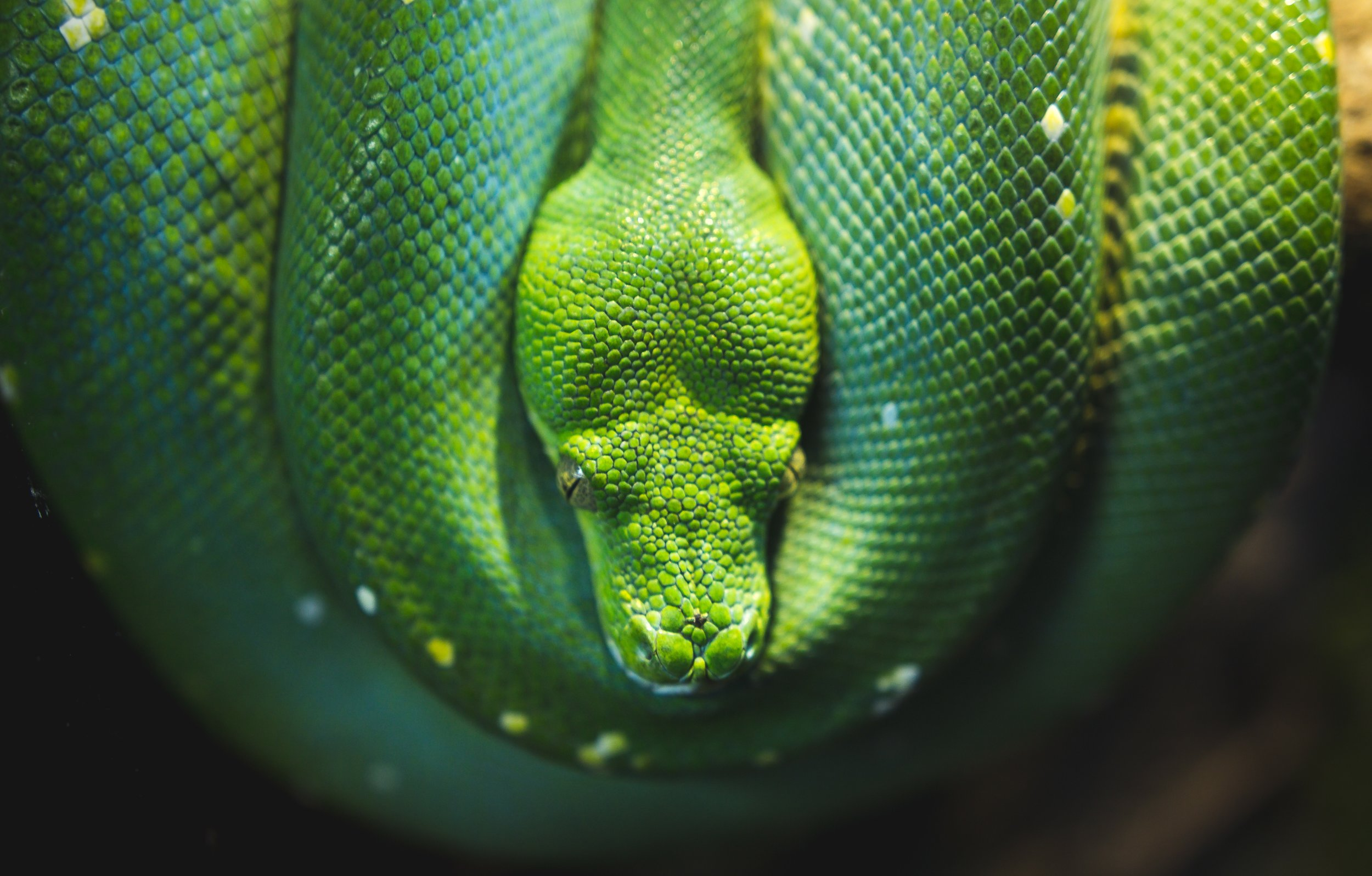 snake up close sebastian spindler Up cW.jpg