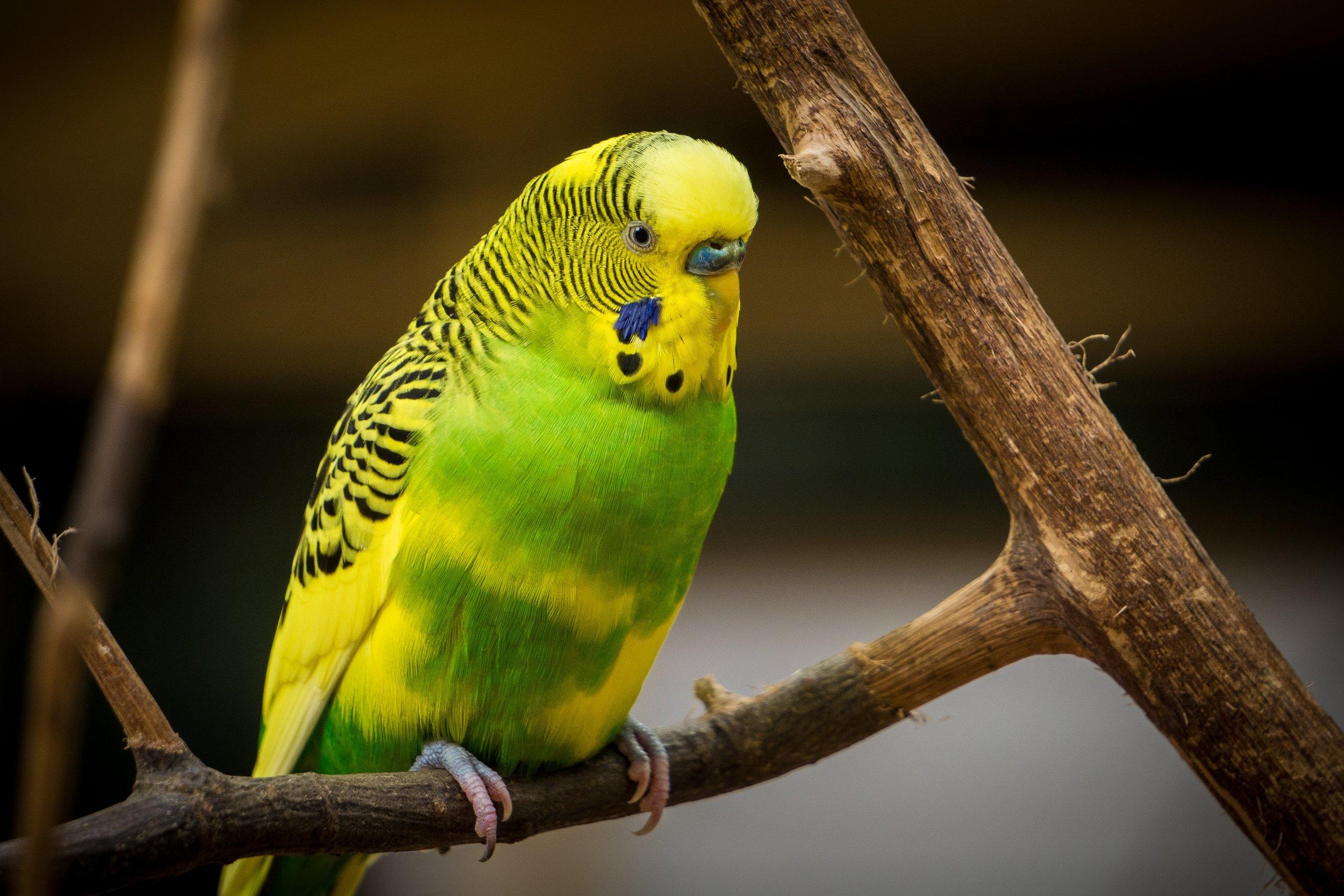 dalton touchberry bird atlanta zoo UP cW.jpg