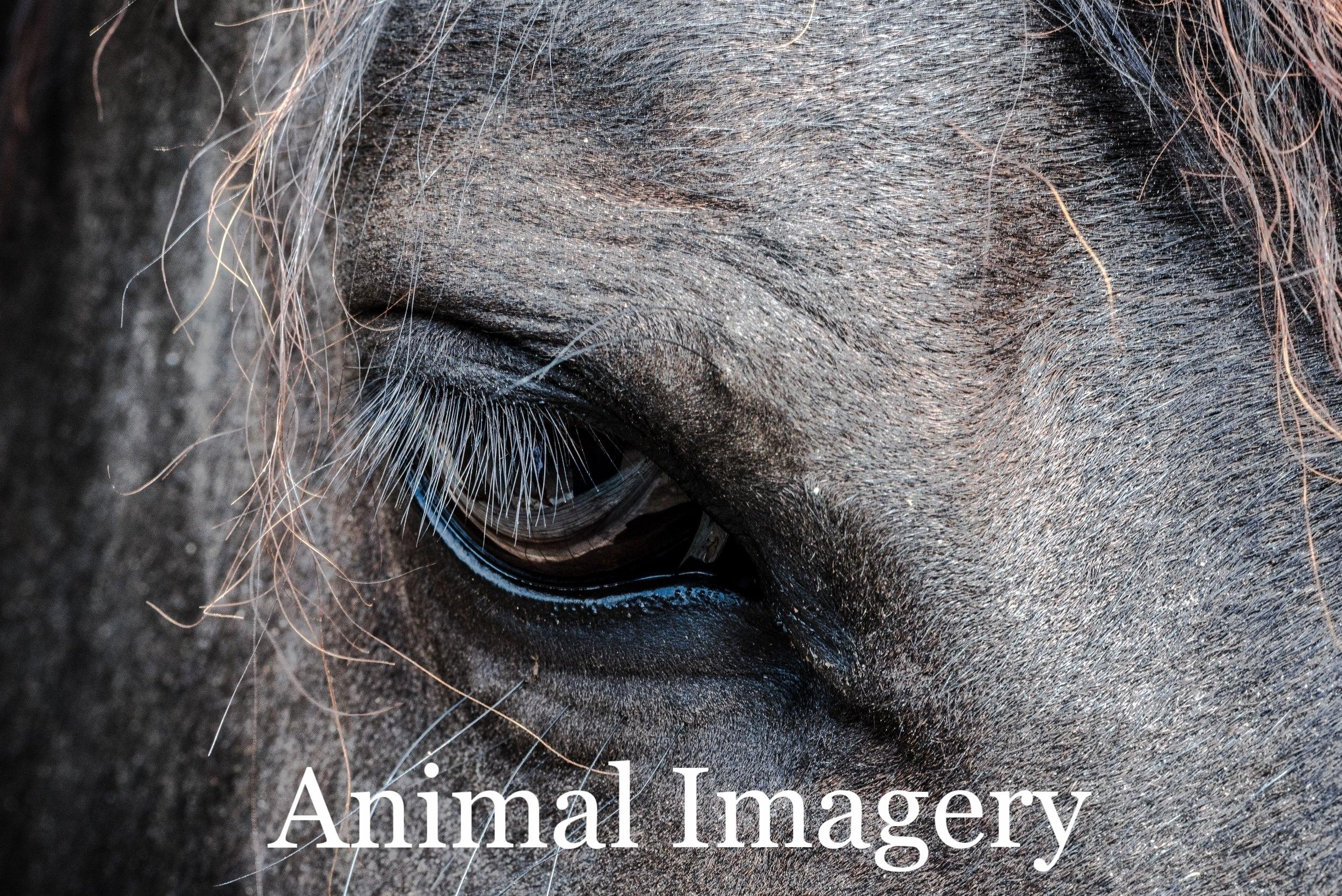 jez timms horse face detail  Up cW.jpeg