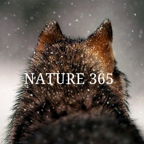 Nature 365 poster