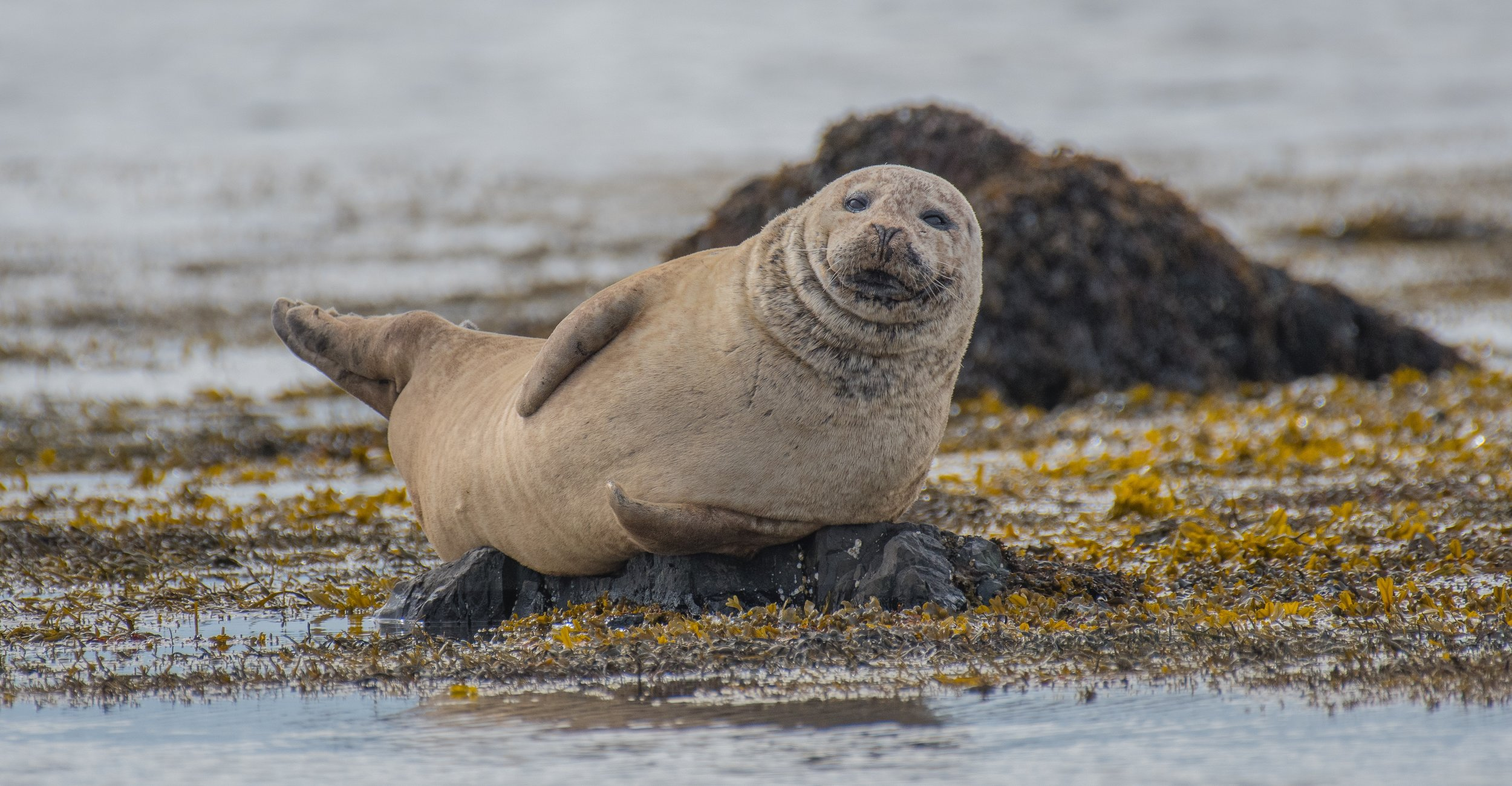 pascal-mauerhofer-Seal Iceland Up cW.jpg